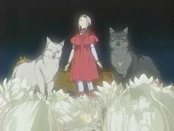 Cheza et les loups